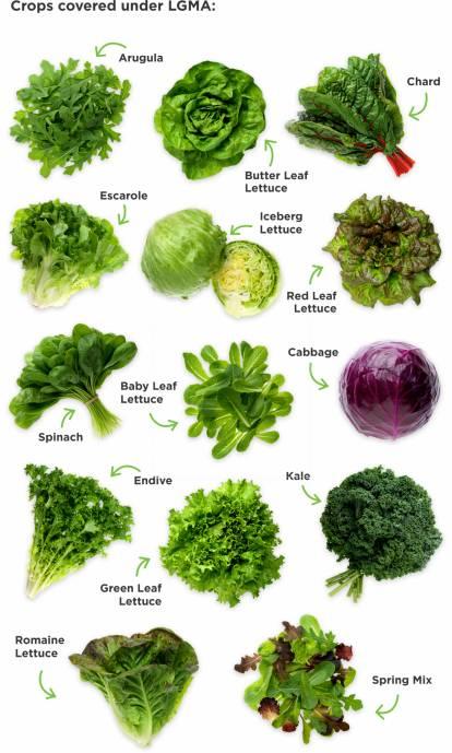 Crops covered under LGMA: Arugula, Chard, Butter Leaf Lettuce, Escarole, Iceberg Lettuce, Red leaf Lettuce, Baby Leaf Lettuce, Cabbage, Spinach, Endive, Kale, Green Leaf Lettuce, Romaine Lettuce, Spring Mix