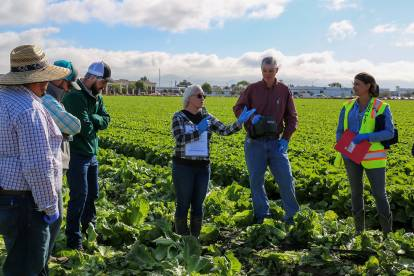 LGMA auditor gives demonstration to group in lettuce field